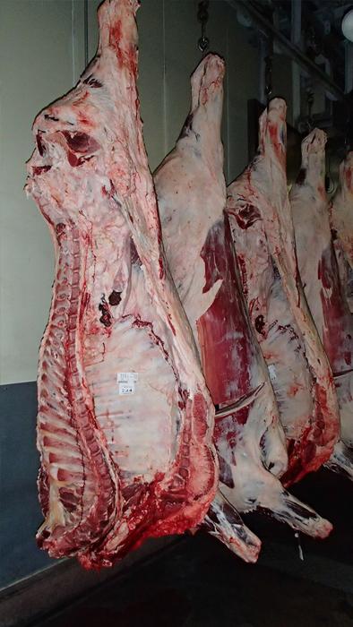 Carcasses de bœufs Wagyu en attente d'enchères