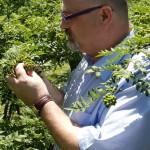 Olivier Derenne dans une plantation d'arbres à sansho