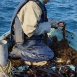 Pêche du wakamé