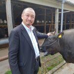 Boeuf Matsusaka à la ferme d'Okada San