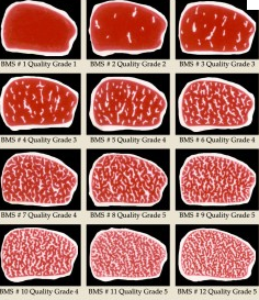 Quality Grade (Japan Meat Grading Association)