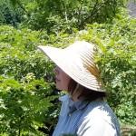 Récolte du sansho raisin