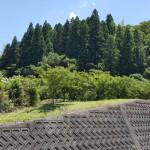 Plantation d'arbres à Sansho sur les collines de Wakayama