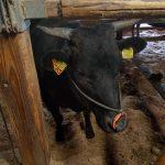 Ses origines laissent espérer une vente de l'animal aux environs de 170 000 €