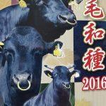 Magazine dédié au boeuf Matsusaka Wagyu