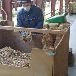 Préparation de la paille de riz à l'exploitation d'Oo Zato Ise