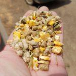 Mélange de graines et céréales