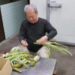 Préparation du wasabi