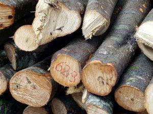 Nishikidôri - Le Tosa Binchotan est produit à partir des chênes Arakashi ou Ubamegashi .